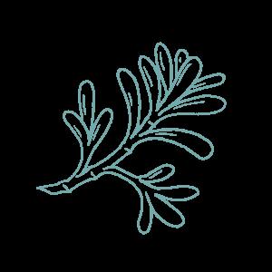Illustration of Sea Purslane botanical